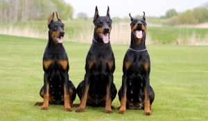 страх от кучета