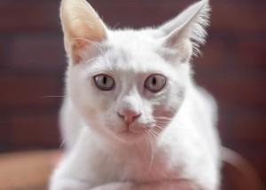 котката, помогнала за разкриване на убийство