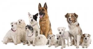 забранени храни за кучета