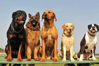 кучета